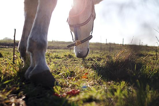 Sammenlign hesteforsikring