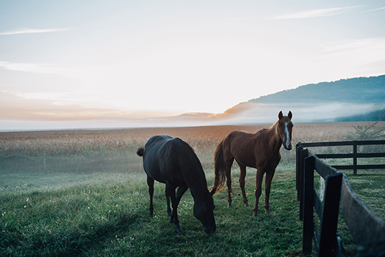 Hesteforsikring pris