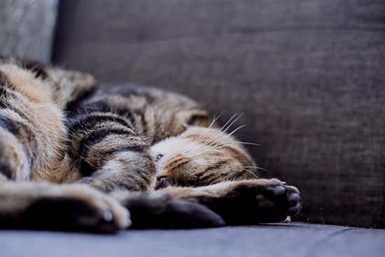 Finn beste katteforsikring