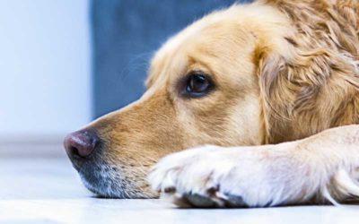 Dyreforsikring- Hvilken er best?